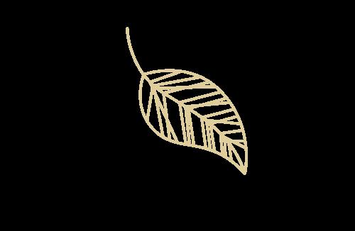 leaf-life-and-career-coach