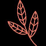 3 leaf