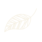 life-and-career-small-leaf